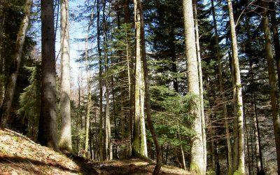 Le Bois de Chartreuse, un matériau écologique